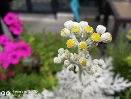图片包含 鲜花, 植物, 户外, 花瓶  描述已自动生成