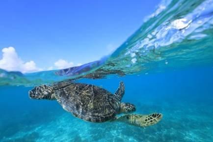 乌龟在水里 描述已自动生成