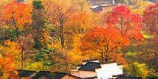 秋天来了!国内最适合秋季游玩的地点集合