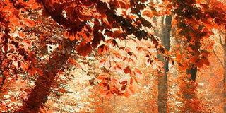 东北不止有寒冷的冬天 还有奇特的秋天