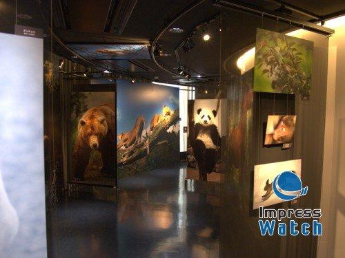 野生动物世界 前川贵行银座动物园写真展