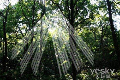 模糊树风景图片
