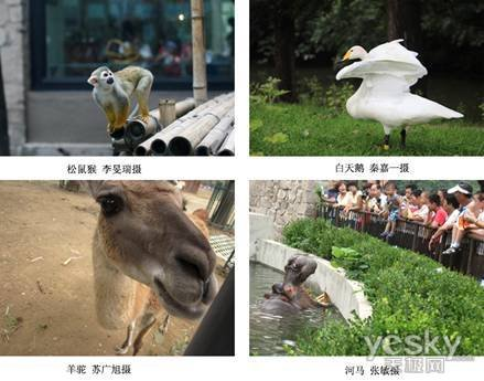 机捕捉动物的精彩瞬间