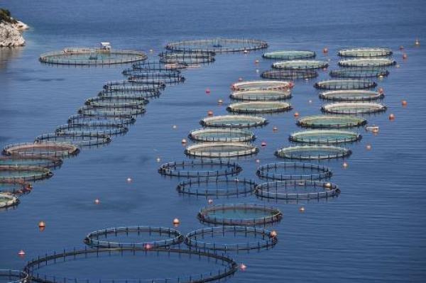 水产养殖和渔业中的区块链 - 区块链如何维持海产业