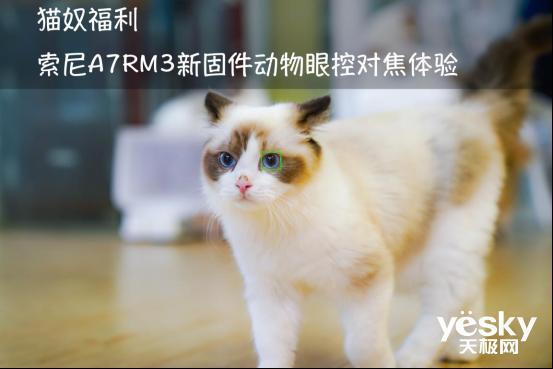 猫奴福利 索尼A7RM3新固件动物眼控对焦体验