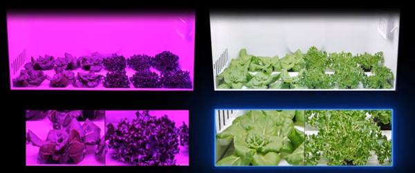 CES 2020最具生活气息的产品 室内园艺机展示更美的活法